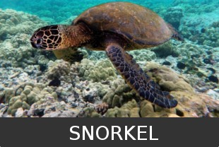 Snorkeling Tours Costa Rica