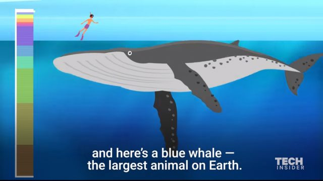 How deep the ocean is ? This incredible animation shows it.