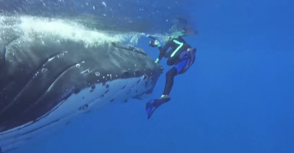 Saved by a humpback whale