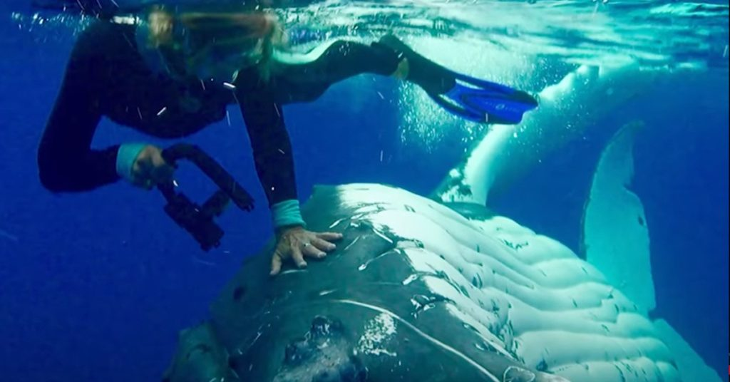 Nan Hauser Biologist swimming with whales