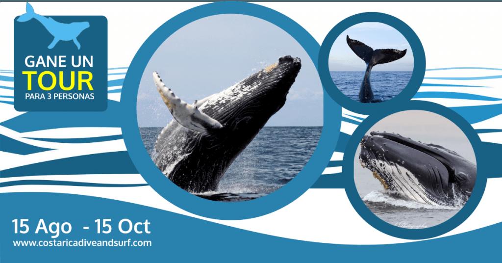 Gane un Tour para ver las ballenas jorobadas