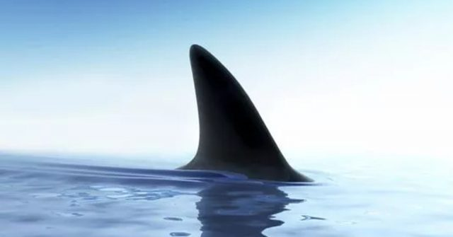 10 Things deadlier than Sharks