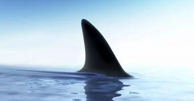 10 Things deadlier than Sharks