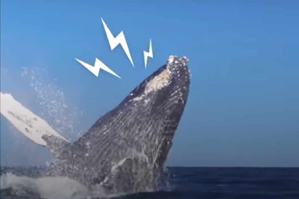 Whale thanks rescuers in a very special way