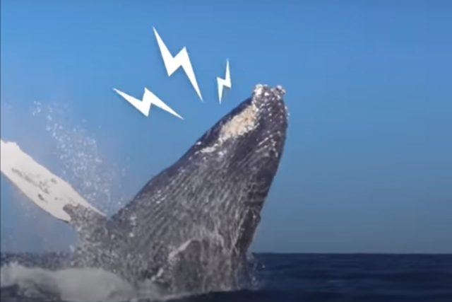 Rescued Whale shows gratitude  in The Most Amazing Way