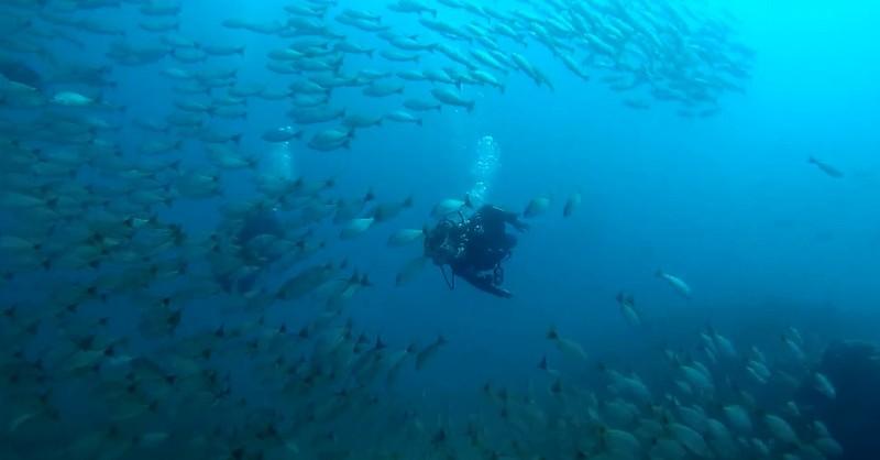 Biodiversity at Caño Island Costa Rica diving destination.