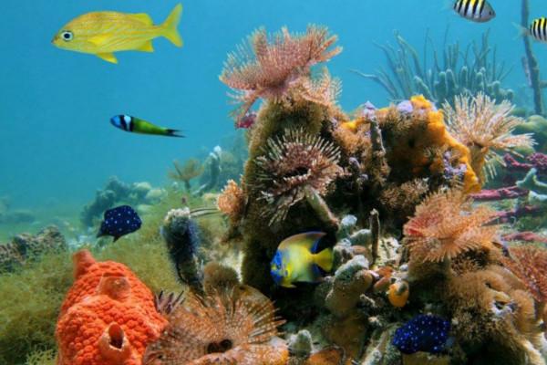 Cahuita national park snorkeling experience