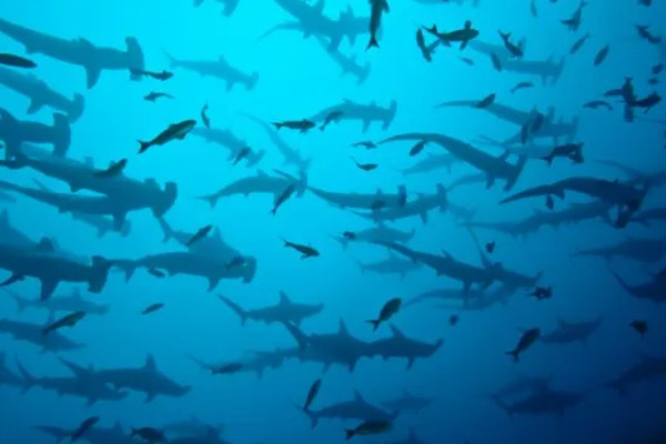 Best Diving in Costa Rica: 5 amazing dive sites to explore in 2020