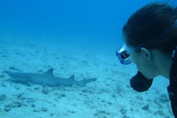 Cano island Scuba Diving