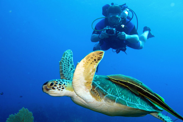 Scuba Diving in Guanacaste