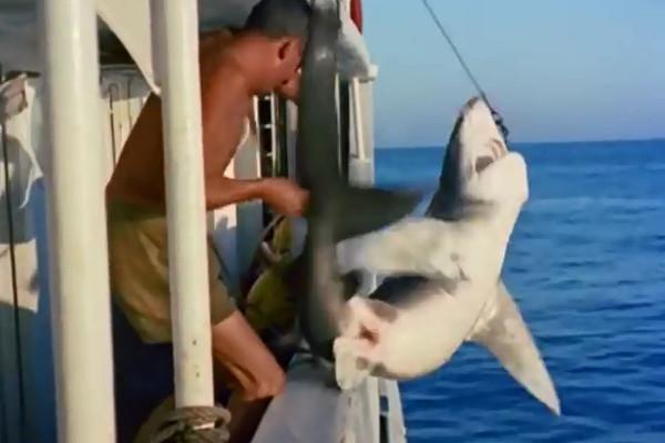 Calypso Crew member killing a shark