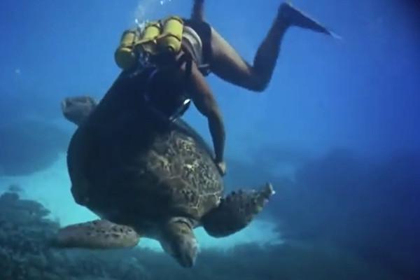 Calypso Crew member riding a marine turtle.